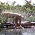 Paul the Nixa Hellhound captured on film at Camp Winoka